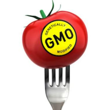 Essay on genetically modified crops and food security systems
